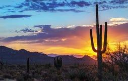 Vibrant Arizona Landscape Sunrise With Cactus & Mountains In Background. Vibrant & Coloful Arizona Desert Landscape Sunrise With Cactus & Mountains In Background royalty free stock image