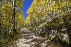 Vibrant Aspen lined dirt road near Telluride Colorado in the fall. Stunning Aspen tree lined road near Telluride Colorado iwith fall colors royalty free stock photo