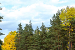 Vibrant autumn background with colorful trees Stock Image