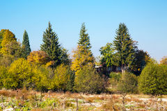 Vibrant autumn background with colorful trees and Stock Image