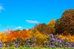 Vibrant autumn colors in National Arboretum, Washington DC, USA. Royalty Free Stock Photos
