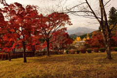 Vibrant Autumn Colors in Nikko, Japan Stock Photography