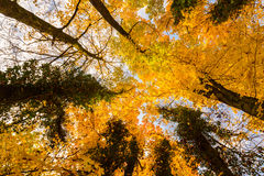 Vibrant autumn colors on a sunny day in the forest Stock Photo