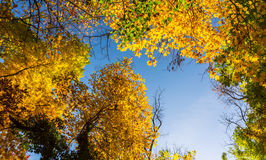 Vibrant autumn colors on a sunny day in the forest Stock Photography