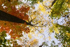 Vibrant autumn colors on a sunny day in the forest stock photos