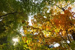 Vibrant autumn colors on a sunny day in the forest royalty free stock photos