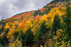 Vibrant Autumn Colours in the Adirondacks. Wooded Mountainside in the Adirondacks, NY, on a Rainy Fall Day. Vibrant Autumn Colours royalty free stock photo