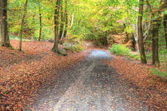 Vibrant Autumn Fall forest landscape image Royalty Free Stock Photography