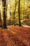 Vibrant Autumn Fall forest landscape image Stock Photography