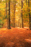 Vibrant Autumn Fall forest landscape image Royalty Free Stock Photos