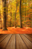 Vibrant Autumn Fall forest landscape image with wooden planks fl Stock Image