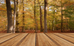 Vibrant Autumn Fall forest landscape image with wooden planks fl Royalty Free Stock Image