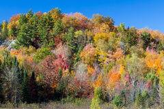 Vibrant Autumn Hillside Royalty Free Stock Photo