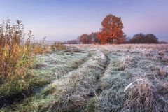 Vibrant autumn nature landscape. Grassy meadow with hoarfrost and colorful trees with red foliage on horizon in autumn morning. stock images