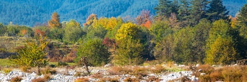 Vibrant autumn panorama background with colorful Stock Photography