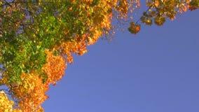 Vibrant autumn sky stock footage