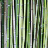 Bamboo tree wood background. Vibrant background of old bamboo tree wood Stock Image