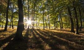 Vibrant backlit woodland Royalty Free Stock Image