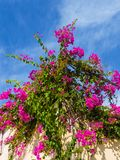 Vibrant beautiful purple flowers growing on the roof stock images