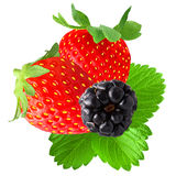 Vibrant berries on white. Isolated fruits. Two strawberry and blackberry with leaf isolated on white background as package design element royalty free stock image