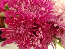 Vibrant Bundle of Pink Flowers. Vibrant bundle of deep pink flowers royalty free stock image