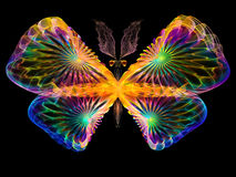 Vibrant Butterfly Stock Image