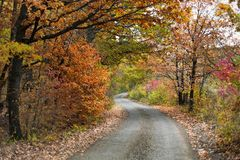 Vibrant color autumn forest and a curvy road.  Stock Photography