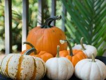 Decoration. Vibrant color palette of pumpkins royalty free stock photos