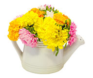 Vibrant colored Chrysanthemum flowers in a white watercan, bouquet, close up, floral arrangement Stock Images