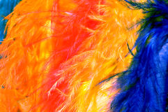 Vibrant colored feathers. Close up of colored feathers Royalty Free Stock Images