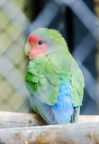 Vibrant colored parrot at the zoo garden, fence,  sitting, close up. Royalty Free Stock Photography