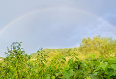 Vibrant colored rainbow over blue sky, countryside, green vegeta Stock Images