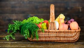 Vibrant and colorful vegetables. Homegrown vegetables. Fresh organic vegetables wicker basket. Fall harvest concept stock photo