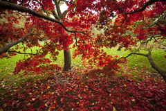 Vibrant colors of autumn. Colors of fall in Cardiff, UK Stock Image