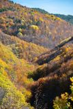 Autumn in the forest. Vibrant colors of autumn have paint this picturesque forest scenery stock images
