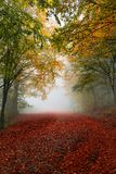 Colorful autumn path. Vibrant colors of autumn have paint this picturesque forest scenery stock images