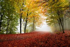 Colorful autumn road. Vibrant colors of autumn have paint this picturesque forest scenery royalty free stock images