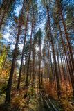 Tree trunks. Vibrant colors of autumn have paint this picturesque forest scenery stock photos