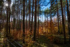 Tree trunks. Vibrant colors of autumn have paint this picturesque forest scenery stock photo