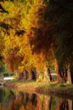Vibrant colors of autumn. At the lake Royalty Free Stock Photography