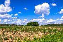 Sunny landscape of the countryside in the beginning of summer. royalty free stock photo