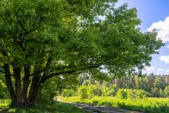 Sunny landscape of the countryside in the beginning of summer. A widely spreading shady oak tree next to the deserted country road. Vibrant colors of early Royalty Free Stock Photo