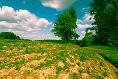 Sunny landscape of the countryside in the beginning of summer. stock photos
