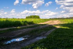 Deserted rural dirt road across the young meadow on a bright summer day, Russia. Vibrant colors of early summer and bright sunlight evokes admiration and Royalty Free Stock Photography