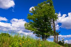 Sunny landscape of the countryside in the beginning of summer. stock photo