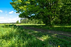 Sunny landscape of the countryside in the beginning of summer. A widely spreading shady oak tree next to the deserted country road