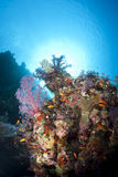 Vibrant and colourful tropical coral reef scene. Royalty Free Stock Image