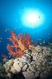 Vibrant and colourful tropical coral reef scene. Stock Photography