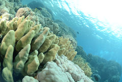Vibrant and colourful tropical reef Royalty Free Stock Photos