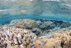 Vibrant and colourful tropical reef Stock Photo